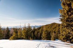 Clear winter day Royalty Free Stock Photo