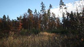Clearane del bosque en otoño almacen de video