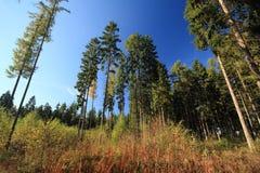 Clearane della foresta in autunno fotografia stock libera da diritti