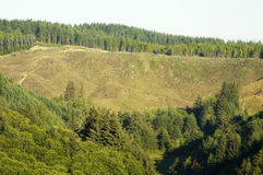 Clearcut 4. Clearcut area on a mountainside along the Pacific coast Stock Photography