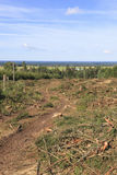 Clearcut area Royalty Free Stock Photography