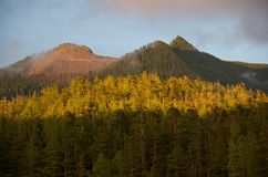 Clearcut area on mountain top seen through fog in evening, Nuchatlitz Provincial Park stock photography