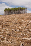 Clearcut forest Stock Photography