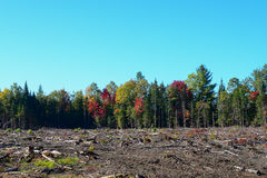 Clearcut logging Stock Images