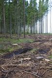Clearcutting area Stock Images