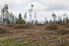 Clearcutting area Royalty Free Stock Image