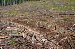 Clearcutting, clearfelling lub clearcut wyróbka na bukowym lesie, Fotografia Royalty Free