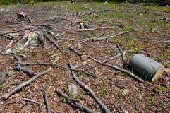 Clearcutting, clearfelling lub clearcut wyróbka na bukowym lesie, Obrazy Royalty Free