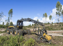 Clearcutting Royalty Free Stock Image