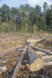 A cleared area of lumber Royalty Free Stock Photography