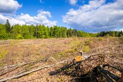 Cleared forest outdoor scenery south Germany. An image of a cleared forest outdoor scenery south Germany stock photography