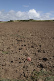 Cleared potato field. Stock Images