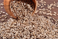 Cleared sunflower seeds in a bowl. Cleared sunflower seeds in a wooden bowl stock photo