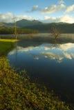 clearen clouds den reflekterande treen för laken Arkivfoto