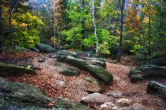 Clearing in Autumn Mountain Forest Royalty Free Stock Images