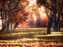 Clearing in autumn park illuminated by the sun Royalty Free Stock Photo