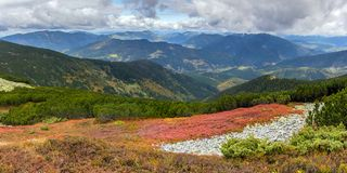 Clearing with berries. Mountain slopes in autumn in Ukrainian Carpathians Royalty Free Stock Images