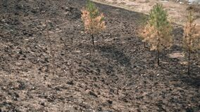 A clearing with burnt grass. Small surviving trees among the grass