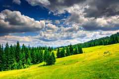 Clearing with a footpath in a forest on mountain slopes after a. A large clearing with a footpath in a coniferous forest on the high slopes of the mountain. sky Stock Photography