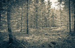 Clearing in forest Royalty Free Stock Image