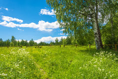 Clearing in the forest, before descending to the Holy Pokrovsky Royalty Free Stock Images