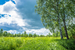 Clearing in the forest, before descending to the Holy Pokrovsky Royalty Free Stock Photos