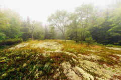 Clearing in the Forest on a Foggy Day Stock Photo