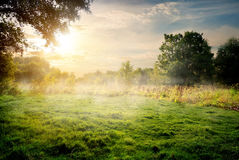Clearing in the forest Royalty Free Stock Photo