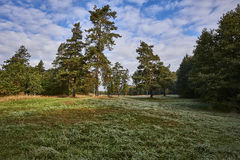 Clearing in the forest in sunny summer morning Stock Photography