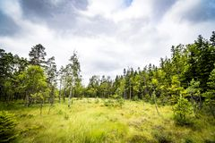 Free Clearing In A Forest With Tall Green Grass Stock Photography - 126030302