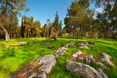 Clearing in Israel Stock Photography