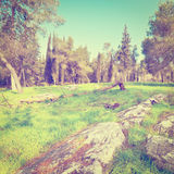Clearing in Israel Royalty Free Stock Photos