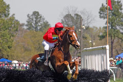 Clearing the jump. Horse and rider clear the jump during steeplechase Royalty Free Stock Image