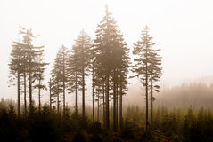 Clearing of trees in the fog Royalty Free Stock Photos