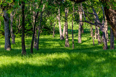 Clearing in Wooded Forest Stock Photo