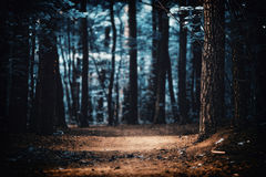 Clearing in the woods. In dark colors Royalty Free Stock Images
