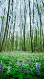 A clearing in the woods Royalty Free Stock Photography