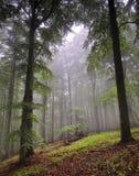 clearingskog Arkivfoto