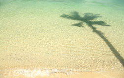 Clearly sea water with the shadow of coconut tree Royalty Free Stock Image