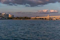 CLEARWATER,佛罗里达- 2015年5月04日:在Clearwater海滩,佛罗里达的日落 与海豚的都市风景 库存图片