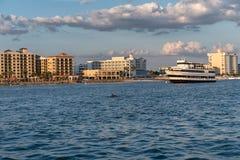CLEARWATER,佛罗里达- 2015年5月05日:海豚和轮渡在Clearwater 风险轻率冒险日落时间 库存图片