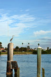 Clearwater Beach. A heron in Clearwater Beach, Florida, USA Stock Photos