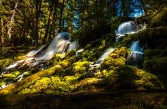 Clearwater fällt Umpqua-staatlicher Wald stockbilder