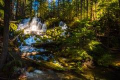 Clearwater fällt Umpqua-staatlicher Wald stockfotografie