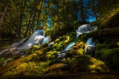 Clearwater fällt Umpqua-staatlicher Wald stockbild
