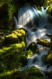 Clearwater fällt Umpqua-staatlicher Wald lizenzfreies stockbild