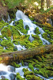 Clearwater Falls Royalty Free Stock Images