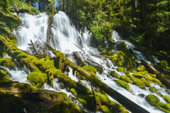 Clearwater Falls, Oregon Stock Photo