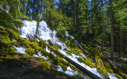 Clearwater Falls, Oregon Royalty Free Stock Image