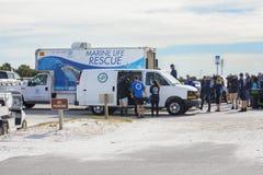 Clearwater Marine Aquarium Turtles Release Event royalty-vrije stock foto